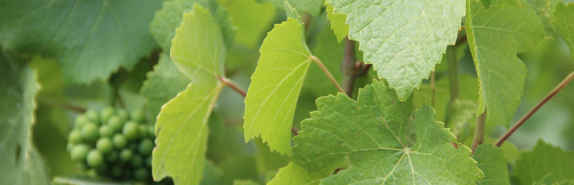 Agronomie et perspectives vinicoles 2020 au menu du 3ème Afterwork